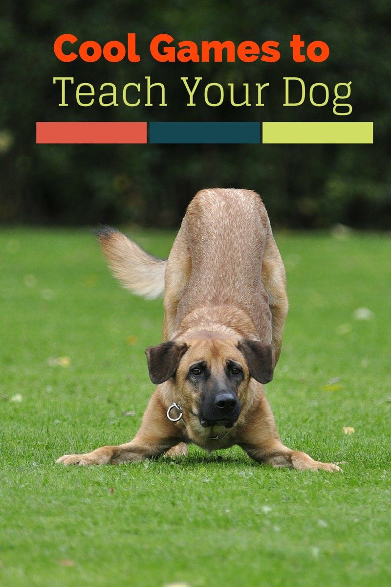 Games-to-teach-your-dog