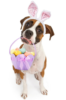 column 002 Easter-dog