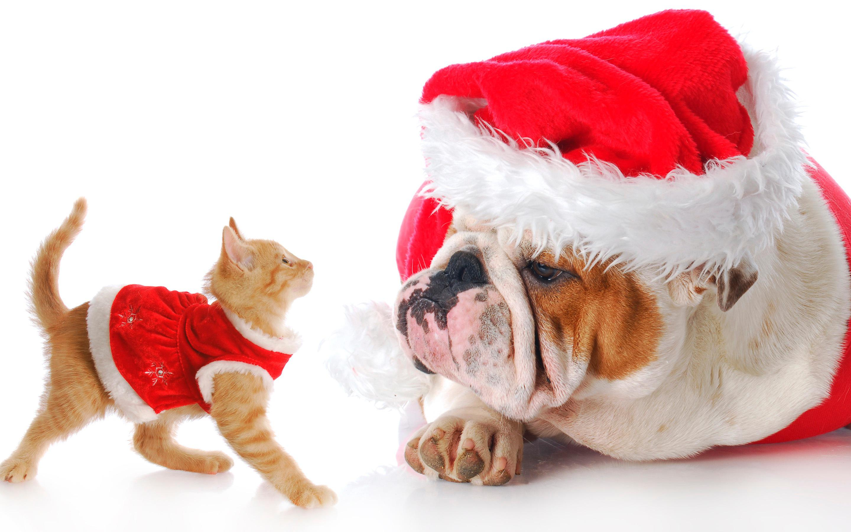 2014 december vip newsletter welcome to the pets hotel dog cat