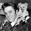 Elvis-Presley-and-Sweet-Pea-the-dog-October-18-1956-elvis-presley-32703637-500-644