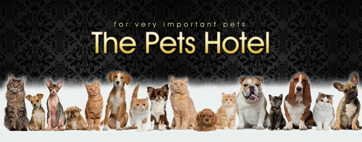 Boarding Kennels For Cats And Dogs